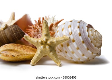 Assorted seashells on a white background