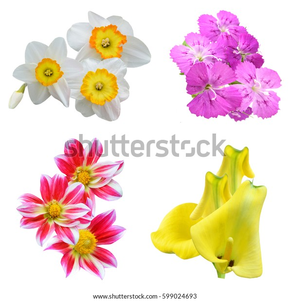 Assorted seasonal flowers in blooming, isolated white