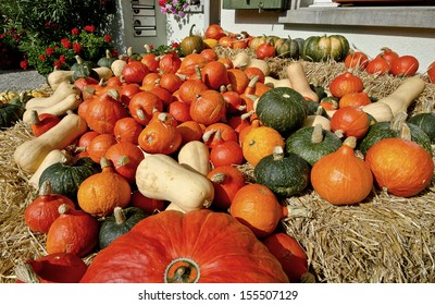 Assorted shaped and colored pumpkins