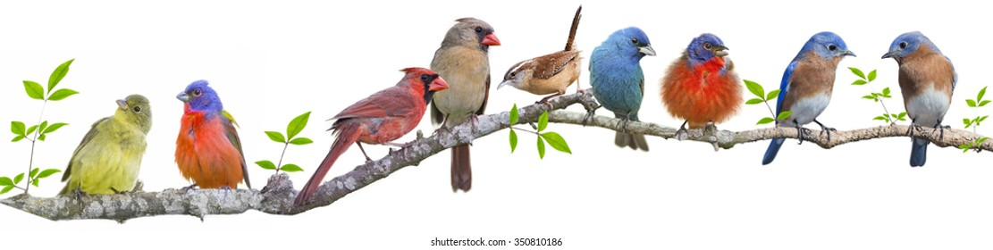 Assorted Songbirds on a Leafy Branch