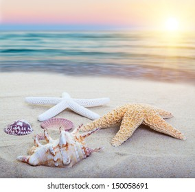 Assorted starfish and sea shells on a beach, main focus on first starfish.
