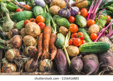 Assorted vegetable background, bio organic vegetables, fresh farm produce on farmer market