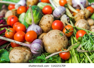 Assorted vegetable background, healthy organic vegetables, fresh produce on farmer market