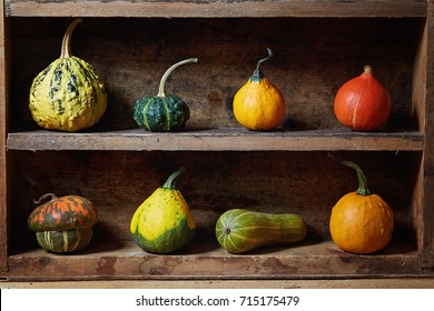 Assortment of different decorative and edible pumpkins on old wooden shelf. Still life with decorative gourd.