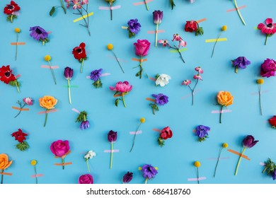 Assortment of flowers taped onto a light blue wall.