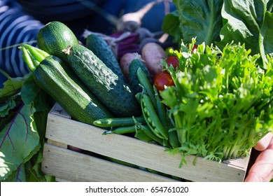 Assortment of fresh organic vegetables in wooden box. Man holds a crate of farm products in his hands, selective focus