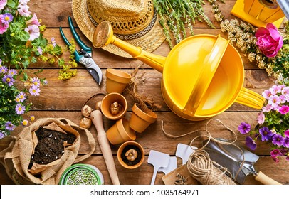 Assortment of garden tools and colorful spring plants for potting into little terracotta flowerpots on a rustic wood background viewed from above