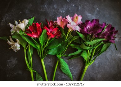 An assortment of lilies in white, red, pink and purple against an absract gray background.  The botanical name is Alstroemeria, but commonly known as Lily of the Incas or Peruvian Lilies.