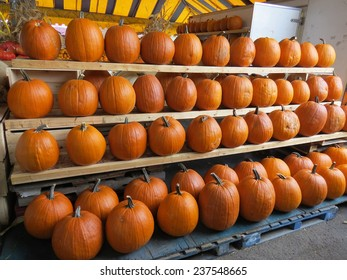Assortment of orange pumpkins for jack o' lanterns at farmers' market for Halloween