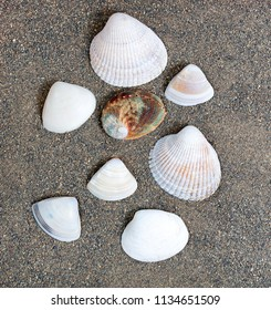 Assortment of seashells on beach sand in overhead view