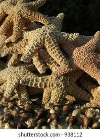 Assortment of starfish, seashells