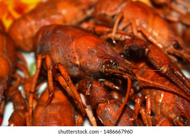 Astacus astacus,the European crayfish, noble crayfish, or broad-fingered crayfish, is the most common species of crayfish in Europe, and a food source, living in unpolluted streams, rivers,and lakes.