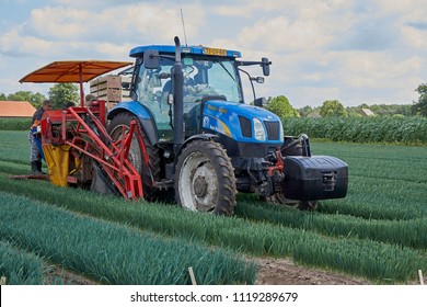 ASTEN, THE NETHERLANDS - JUNE 21, 2018: Mechanical harvest of young cultivated leek plants with tractor and one row harvester at leek nursery of Baltussen. Leek plants will be shipped worldwide.