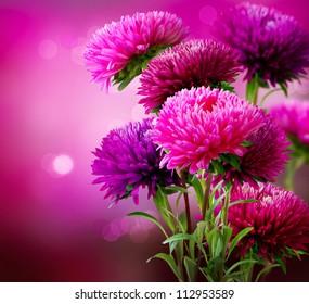 Aster Autumn Flowers Art Design