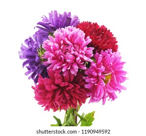 Aster bunch closeup isolated on white background