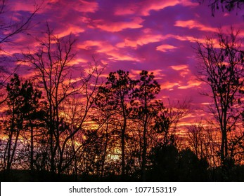 Astonishing sunset through a screen of silhouetted trees