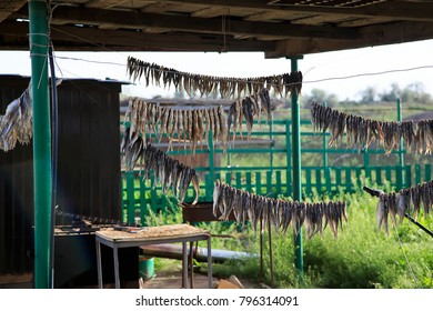 Astrakhan vobla is dried in the open air. Dried fish is the best snack for beer in Russia