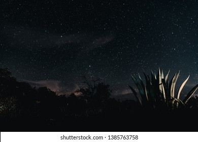 Astro Photography image of the Texas night sky and wilderness