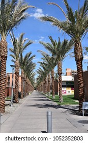 ASU Palm Walk Arizona State University Tempe Arizona 3/17/18