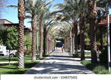 ASU Palm Walk at Arizona State University Tempe Arizona 3/16/19