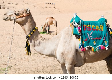 Aswan/Egypt - 1/23/2018 : Arabian Camel with accessories look in Aswan Egypt