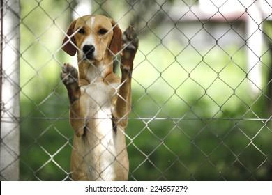 Asyl für Hunde
