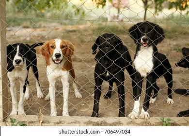 Asylum for dogs. Animal shelter