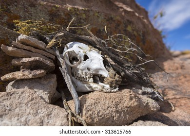 ATACAMA DESERT, BOLIVIA, DECEMBER 31: Detail of rock formation and cow skull, part of the skeleton standing on rocks, blue sky in the background. Bolivia 2015