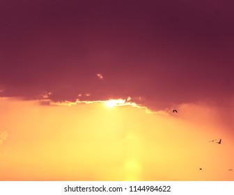 Atardecer colorido del cielo en la playa con la silueta de pájaros volando con la luz del sol en el fondo