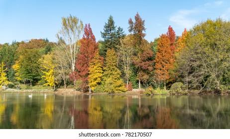 Ataturk Arboretum on Autumn and colorful tree's reflection.