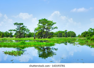 Atchafalaya River Basin, with Cypress trees.