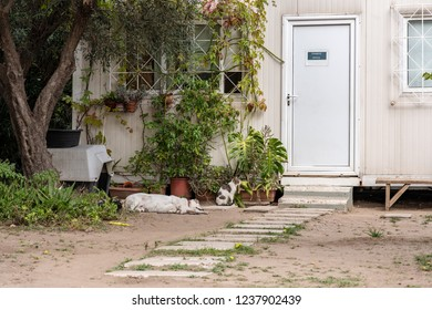 Athens, Greece - October 18, 2018: A cat and dog coexist and hang out together outside the office of the tourist site, the Temple of Olympian Zeus in the city, where stray cats and dogs are common.