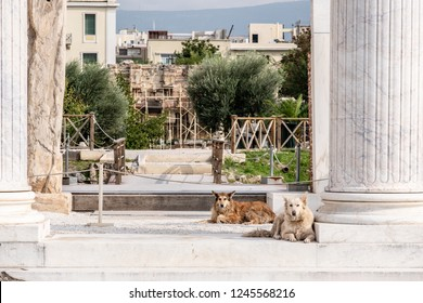 Athens, Greece - October 20, 2018: Two stray dogs stand guard at the entrance to the ancient Hadrian's Library ruins landmark, in Athens, Greece, where stray dogs are commonly seen.