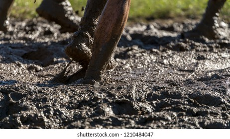 Athlete jumping into mud at an obstacle course race