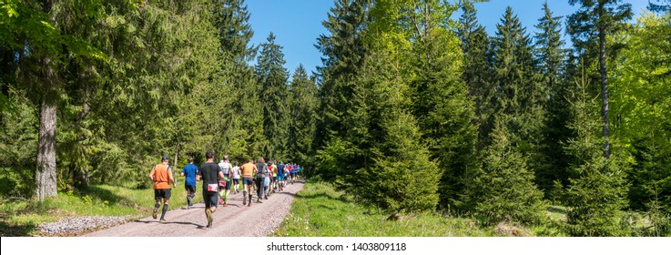 Athletes trail running in a forest panorama