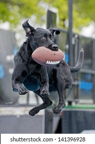An athletic dog catches a football mid-air