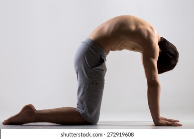 Athletic muscular young man working out, yoga, pilates, fitness training, bend in Cat yoga Pose, Marjaryasana, asana often paired with Cow Pose on the inhale, gray background, low key shot