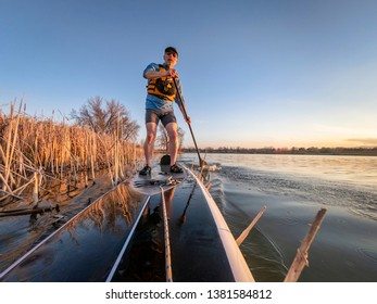 athletic senior man on a stand up paddleboard in sunset light on a calm lake in Colorado, bow view