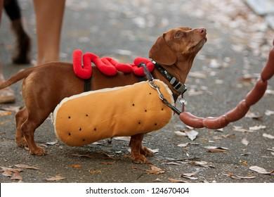 Weiner Dog Halloween Costumes.Dachshund Costume Images Stock Photos Vectors Shutterstock