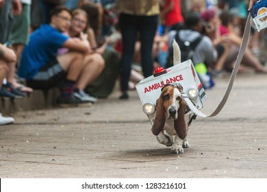 Atlanta, GA / USA - August 18, 2018:  A cute basset hound walks for the crowd wearing an ambulance costume with flashing lights at Doggy Con,  on August 18, 2018 in Atlanta, GA.