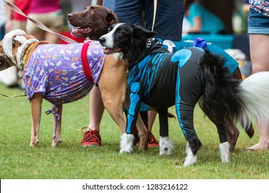 Atlanta, GA / USA - August 18, 2018:  Dogs wear various costumes at Doggy Con, a dog costume contest in Woodruff Park on August 18, 2018 in Atlanta, GA.