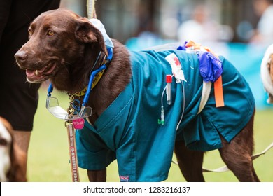 Atlanta, GA / USA - August 18, 2018:  A dog wears medical scrubs and other equipment as part of a lab technician costume at Doggy Con, a dog costume contest in Woodruff Park in Atlanta, GA.
