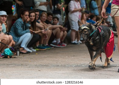 Atlanta, GA / USA - August 18, 2018:  A dog walks in front of crowd of spectators wearing a Wonder Woman costume at Doggy Con, a dog costume contest in Woodruff Park on August 18, 2018 in Atlanta, GA.