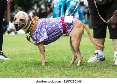 Atlanta, GA / USA - August 18, 2018:  A dog wears a head bandage and hospital gown as part of a hospital patient costume at Doggy Con, a dog costume contest in Woodruff Park in Atlanta, GA.