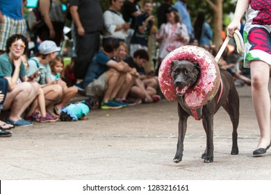Atlanta, GA / USA - August 18, 2018:  A dog wearing a doughnut costume around his head walks in front of a crowd of spectators at Doggy Con, a dog costume contest in Woodruff Park in Atlanta, GA.