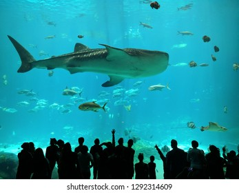Atlanta, Georgia/ United States of America - April 28, 2017: Georgia Aquarium Whale Shark