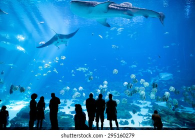ATLANTA, GEORGIA-JUNE 30, 2015: Unidentified people watch a whale shark swim by at the Georgia Aquarium in Atlanta, Georgia