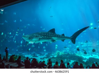 ATLANTA, GEORGIA/USA - MARCH 21, 2016: Visitors learn about the whale sharks, rays, and fish in the Ocean Voyager exhibit at the Georgia Aquarium