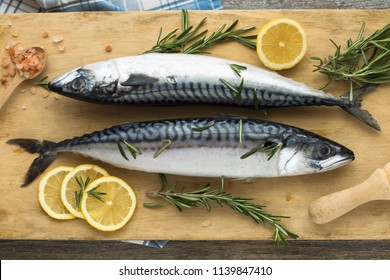 Atlantic bonito  Sarda sarda or Palamida that is large mackerel-like fish