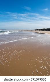 Atlantic coast near Peniche, Portugal.